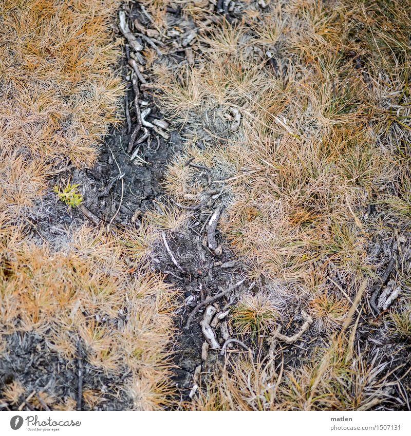 Total am Boden Natur Pflanze Erde Gras Moos Wildpflanze braun gelb grau schwarz Grasnarbe Ast Flechten Farbfoto Gedeckte Farben Außenaufnahme Nahaufnahme Muster