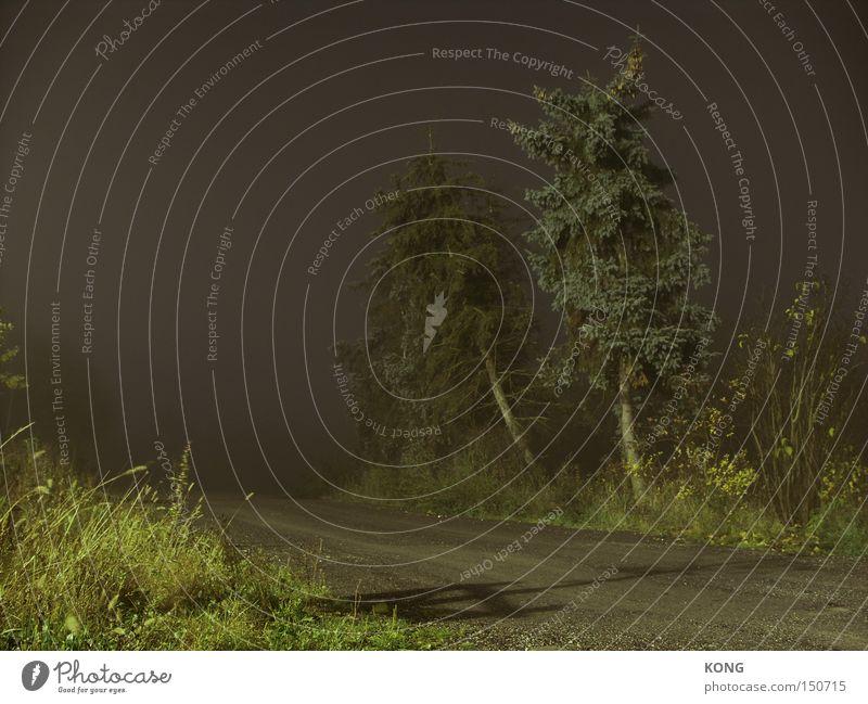 wege ins nichts Natur Himmel Wald dunkel Angst Nebel gefährlich gruselig obskur Nacht Surrealismus Panik Märchen ungewiss spukhaft Hexe