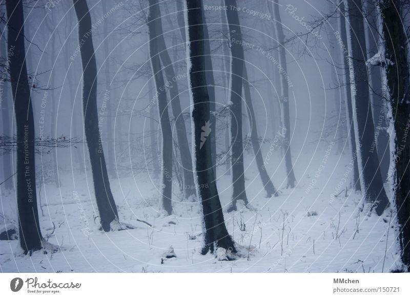 BühnenBild Wald Unterholz dunkel Baum Nebel Schnee kalt Märchen mystisch Hexe Eifel Winter Baumstamm Angst Panik