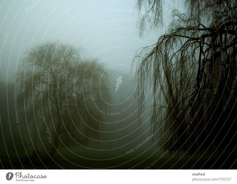 Trübsal blau grün Baum Einsamkeit ruhig Winter dunkel Traurigkeit Tod grau Garten Park Nebel Ast Trauer Zweig