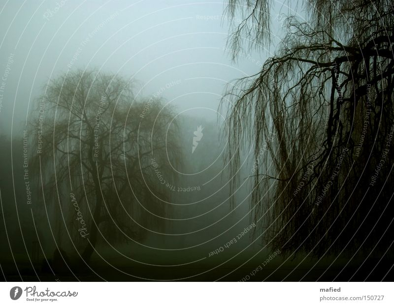 Trübsal ruhig Winter Garten Nebel Baum Park Traurigkeit dunkel blau grau grün Trauer Tod Einsamkeit Friedhof Dunst Weide Ast Zweig Gedeckte Farben Außenaufnahme