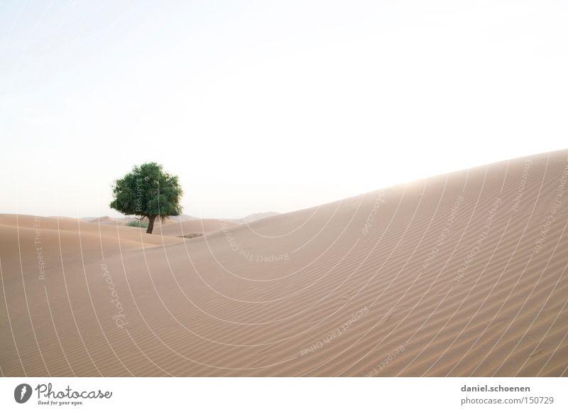 o Tannenbaum Wüste Sand Dubai Oman Düne Wärme Wind Umwelt Klima Baum Naher und Mittlerer Osten Expedition Afrika Arabien Himmel
