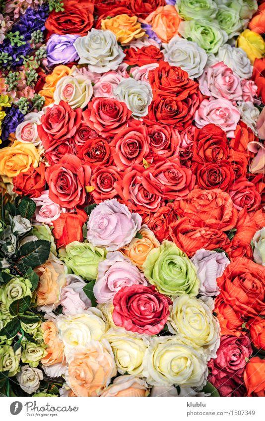 Blumen Hintergrund Natur Pflanze schön Farbe Sommer rot Blüte Wiese natürlich Kunst Garten hell rosa Design Dekoration & Verzierung