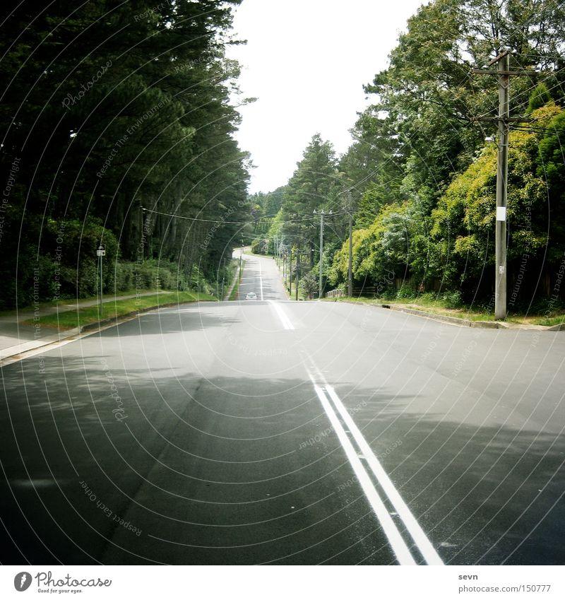 Take me home, country roads Straße Mittelstreifen Wald grün KFZ Tanne Asphalt Beton Seitenstreifen Rasen Baum quer diagonal Ferne Wege & Pfade Verkehrswege