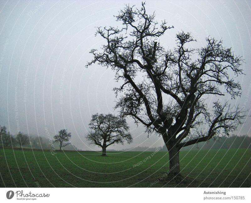 verzweigt Natur Landschaft Herbst Baum Wiese dunkel grün schwarz Zweig Ast Baumstamm Kontrast laublos Nebel schlechtes Wetter Geäst Baumkrone Zweige u. Äste