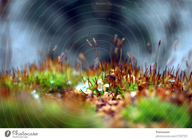 Grabgeflüster Moos Wachstum Detailaufnahme Gras Nahaufnahme kalt grün sprießen Jungpflanze Herbst Makroaufnahme Unschärfe welk
