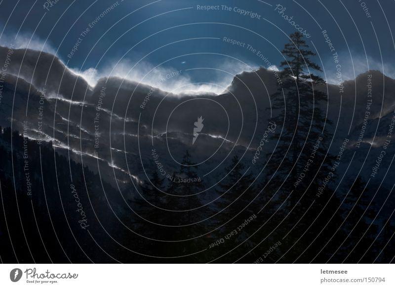 Der Felbertauern Österreich Schneesturm Wind Baum Tanne Fichte blau kalt Gegenlicht Bundesland Tirol Berge u. Gebirge Wechte Winter Sturm