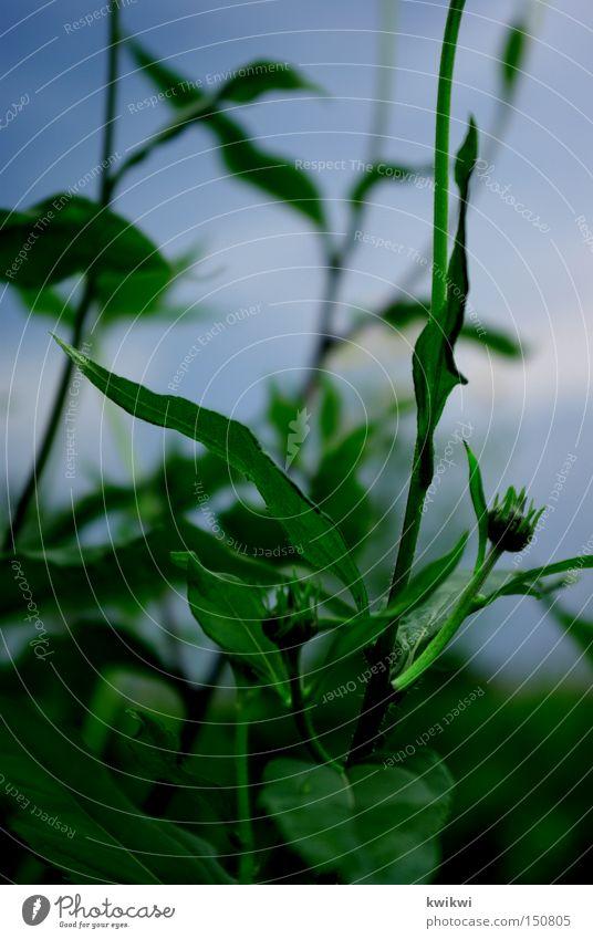 blumäään Himmel Natur blau grün Pflanze Blume Wiese Urwald