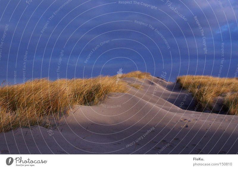 Dänische Dünen Himmel Meer blau Strand Ferien & Urlaub & Reisen Wolken gelb Gras Sand Küste gold bedrohlich Spuren Schilfrohr Gewitter Unwetter