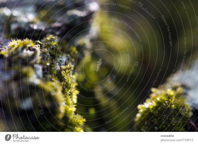 Moos Baumstamm Holz Baumrinde Unschärfe Makroaufnahme Nahaufnahme grau grün Pflanze Photosynthese Sauerstoff Luft Frieden
