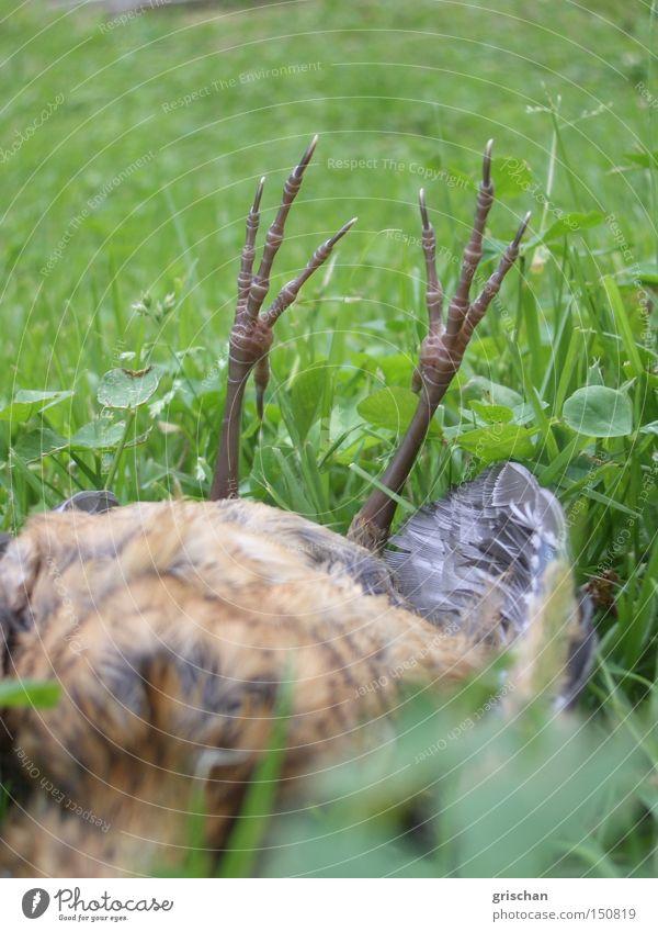 Absturz Tier Tod Vogel Ende liegen Vergänglichkeit hilflos Opfer Beute