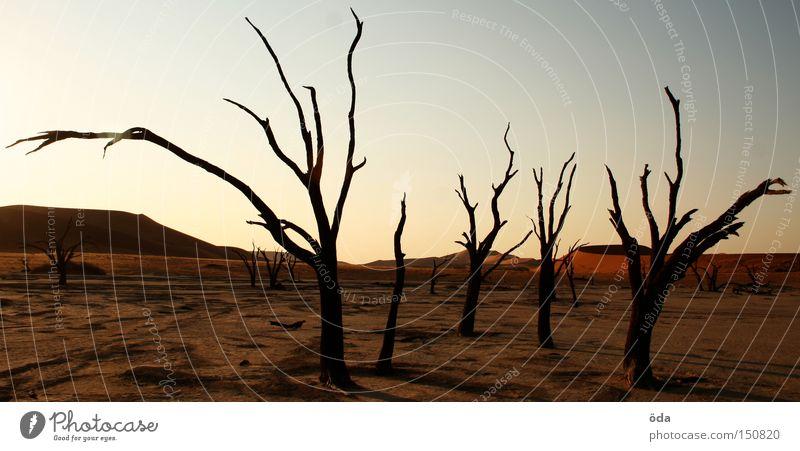 Apocalypse now Wüste Baum Tod vertrocknet trocken Schatten Zweig Ast Namib Einsamkeit Düne Umweltverschmutzung Afrika abgestorben namibia