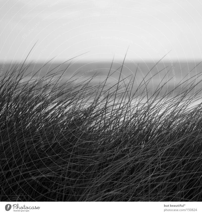 sylter tage° schön Meer Strand Einsamkeit Herbst Gras grau Traurigkeit Küste Wind Hoffnung Schilfrohr Sylt