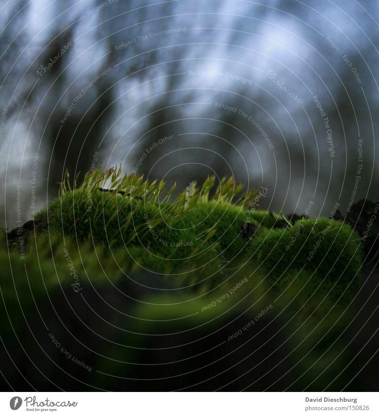 Ohne Moos nix los Pflanze grün Wald Wiese Gras Halm Wachstum feucht nass Himmel Baum Unschärfe Makroaufnahme Nahaufnahme Herbst sky