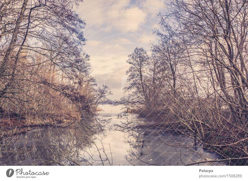 Gefrorener See in der Winterzeit schön Sonne Natur Landschaft Wetter Schneefall Baum Park Wald Fluss hell natürlich blau weiß Skandinavien Dänemark Frost kalt