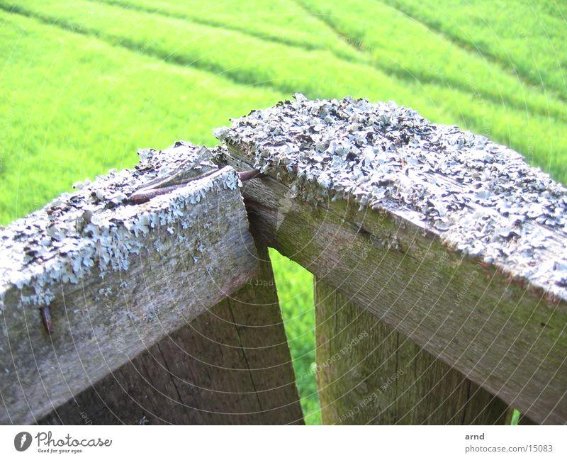 hochsitz I grün Pflanze Wiese Gras Holz Feld Spuren verfallen Holzbrett Nagel Fährte Hochsitz Flechten