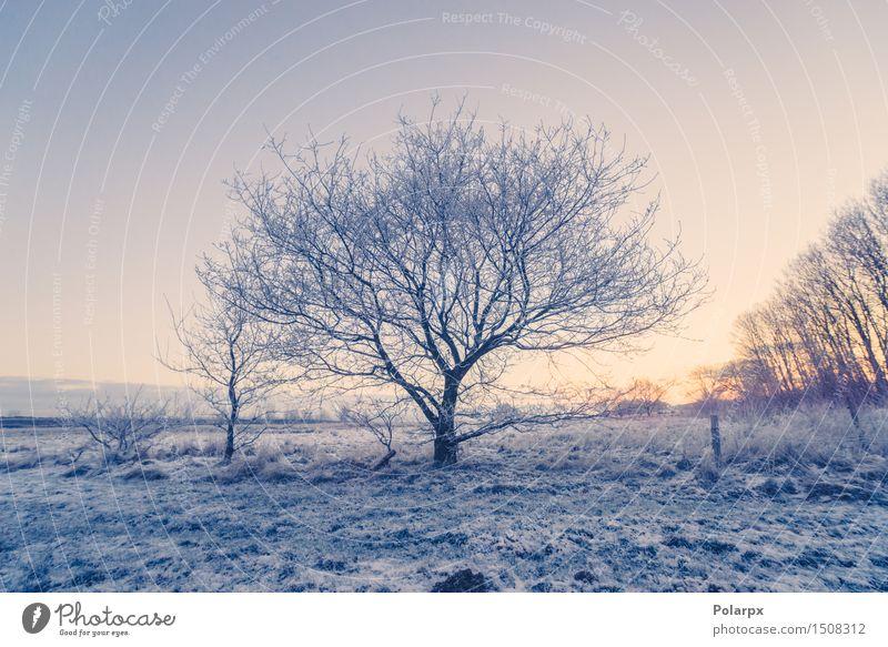 Gefrorener Baum auf einem Feld Himmel Natur Ferien & Urlaub & Reisen Weihnachten & Advent blau schön weiß Landschaft Einsamkeit Winter Schnee hell Wetter