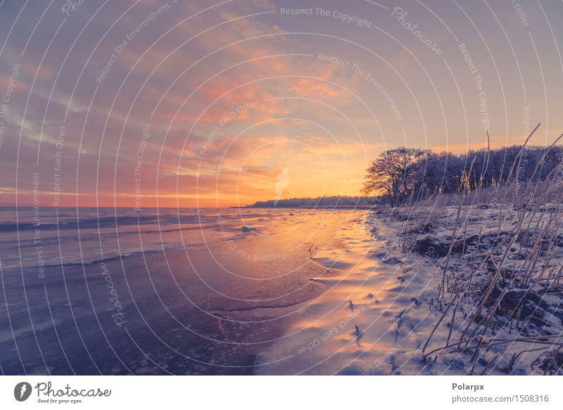 Gefrorenes Seeufer in Skandinavien Himmel Natur Pflanze schön weiß Baum Sonne Meer rot Landschaft Wolken Winter Strand dunkel Umwelt gelb