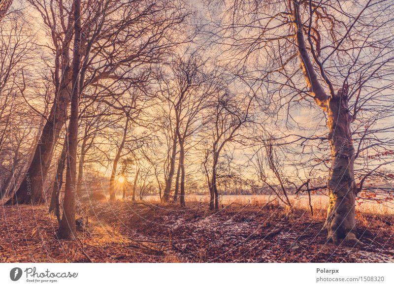Sonnenaufgang an einem Wintermorgen Natur Ferien & Urlaub & Reisen schön weiß Baum rot Landschaft Wald Umwelt Schnee natürlich hell Park Wetter