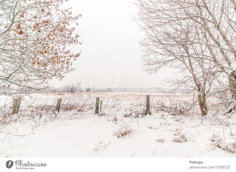 Zaun in einer Winterlandschaft schön Schnee Umwelt Natur Landschaft Himmel Wetter Nebel Baum Gras Wald Coolness grau weiß Skandinavien Dänemark Weihnachten kalt