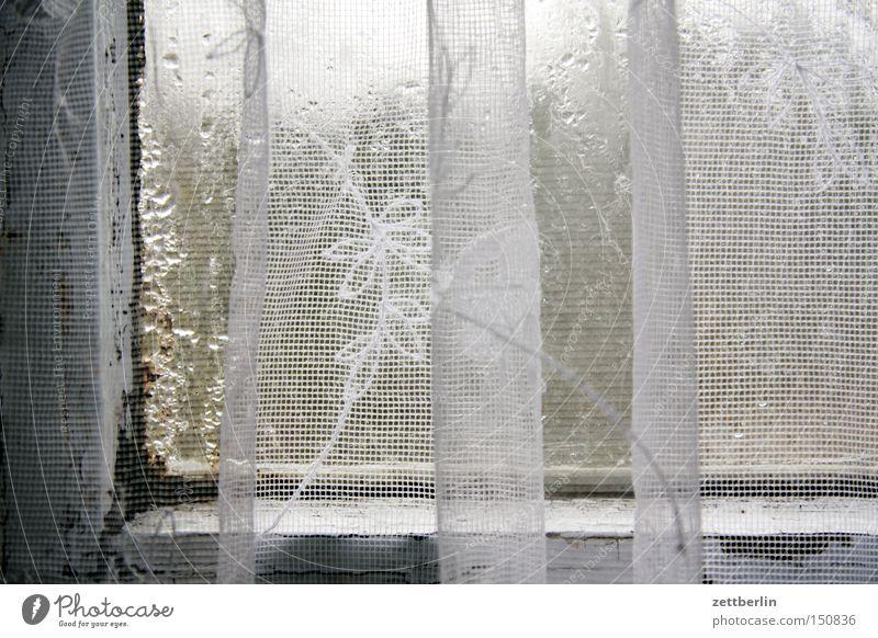 Fenster Fensterscheibe Scheibe Glas Gardine Wasser Kondenswasser Häusliches Leben Altbau Sanieren Renovieren Modernisierung Sauberkeit Schimmelpilze