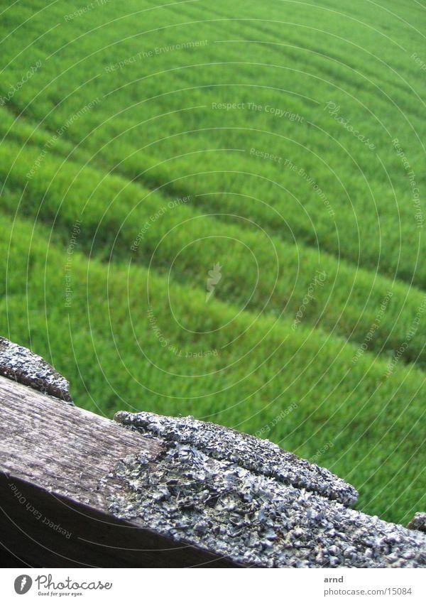 hochsitz II alt grün Pflanze Wiese Gras Holz grau Feld Spuren verfallen Holzbrett Fährte Hochsitz Pilz Flechten