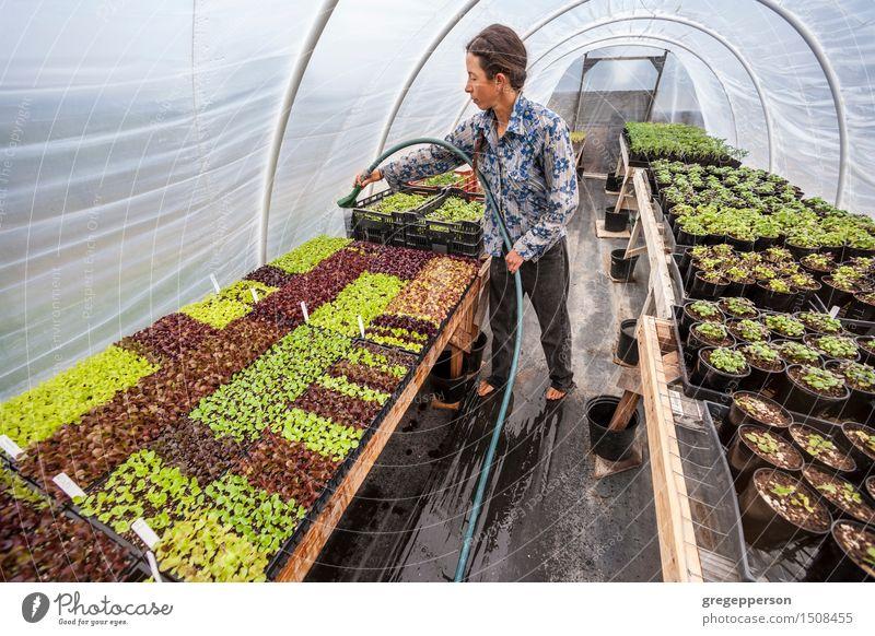 Bewässerungsanlagen der jungen Frau. Mensch Pflanze Erwachsene Garten Arbeit & Erwerbstätigkeit Wachstum Bauernhof Barfuß rustikal Schlauch selbstgemacht