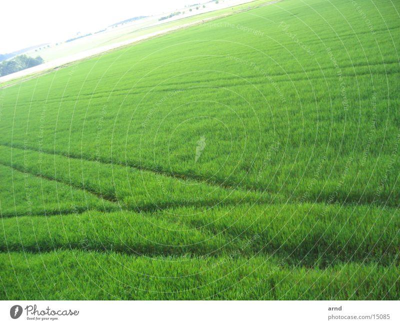hochsitz III Hochsitz Feld grün Aussaat kreuzen Fährte Wiese Gras Spuren fahrrillen Pflanze Getreide Perspektive tracks Flechten schalholz Holzbrett