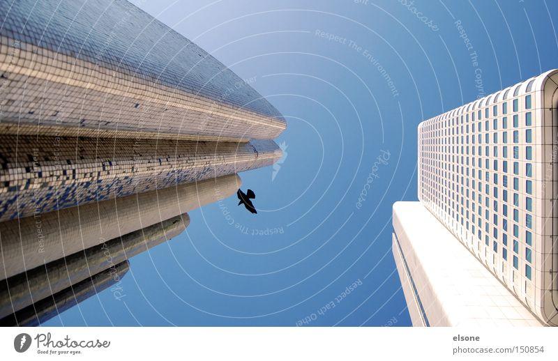 VOGELFREI Frankfurt am Main Brunnen Architekt Architektur Haus Hochhaus weiß hell Freundlichkeit Schönes Wetter Vogel fliegen modern Luftverkehr elsone