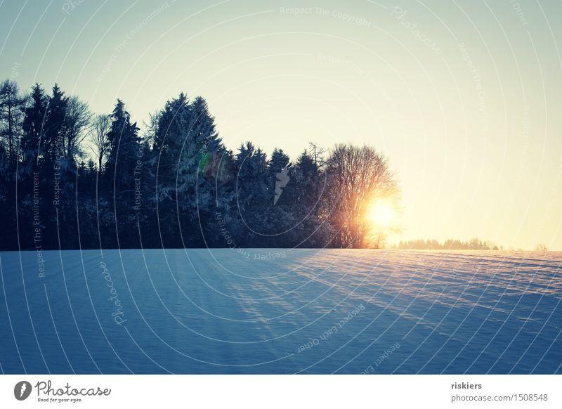 sun goes down Umwelt Natur Landschaft Sonne Sonnenaufgang Sonnenuntergang Sonnenlicht Winter Schönes Wetter Schnee Feld Wald leuchten Erotik Lebensfreude ruhig