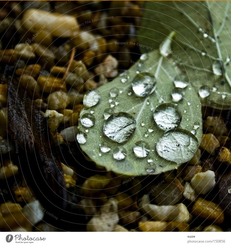 Wasserperlen Natur grün Blatt Herbst Stein Regen Wassertropfen Vergänglichkeit Jahreszeiten Herbstlaub November gefallen