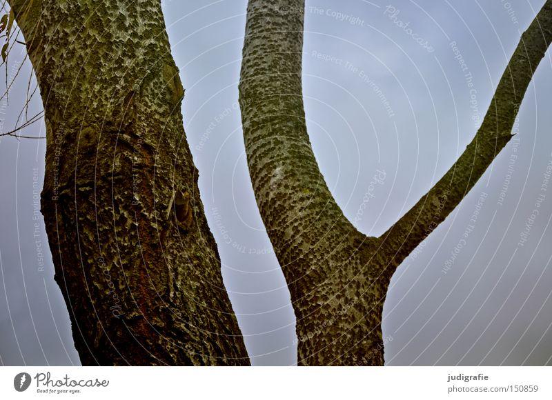 IY Natur Himmel Baum Umwelt Ast Baumstamm kahl Baumrinde Ödland Laubbaum Abzweigung Ypsilon