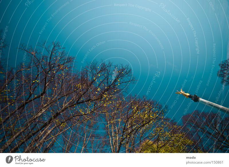 Alice im Wunderland Himmel blau Baum Herbst gold Gold Säule Schwindelgefühl