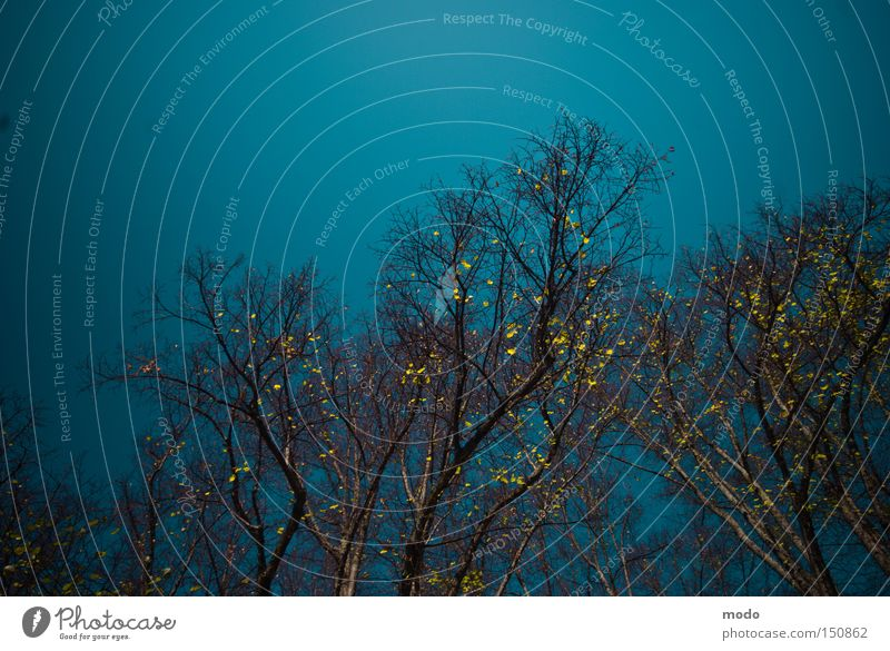 Wunderland ohne Alice Himmel blau Gold Baum Herbst Schwindelgefühl Säule