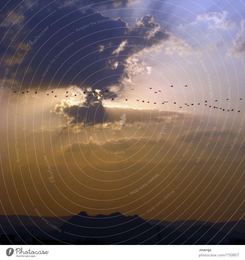 Zugvögel Vogel Indien Wolken Sonne fliegen Vogelschwarm Zugvogel Horizont Dämmerung Sonnenuntergang Sommer Luftverkehr Wärme Ferien & Urlaub & Reisen