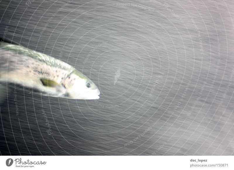 flash did not fire Unschärfe Wasser Aktion Meer Aquarium Fisch dunkel vs hell tief Bewegung ich wollt ich wär Fische