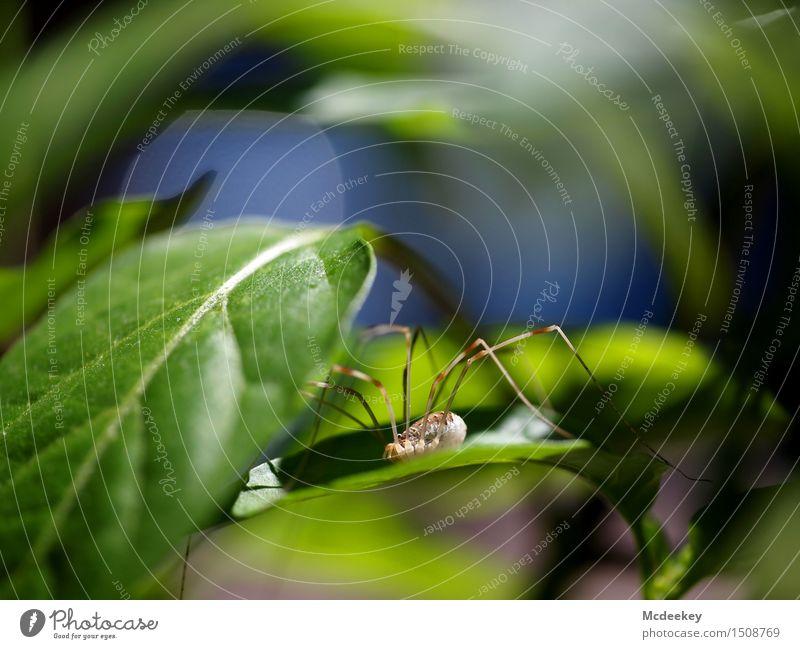 Seltene Balkonbesucher Natur Pflanze blau grün Sommer weiß Sonne Blatt Tier schwarz Umwelt natürlich grau Beine braun Kopf