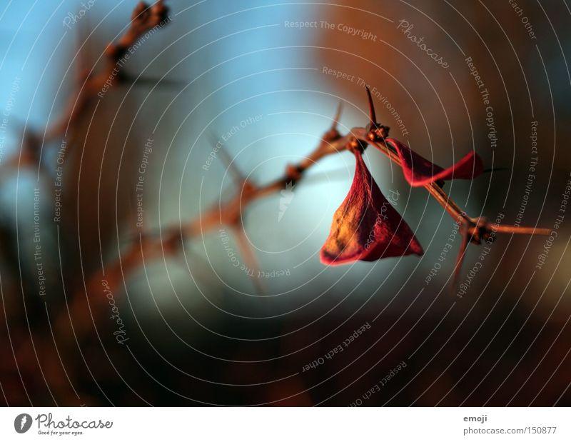 verwelken Natur Pflanze Blatt Ast Stachel Dorn Blütenblatt