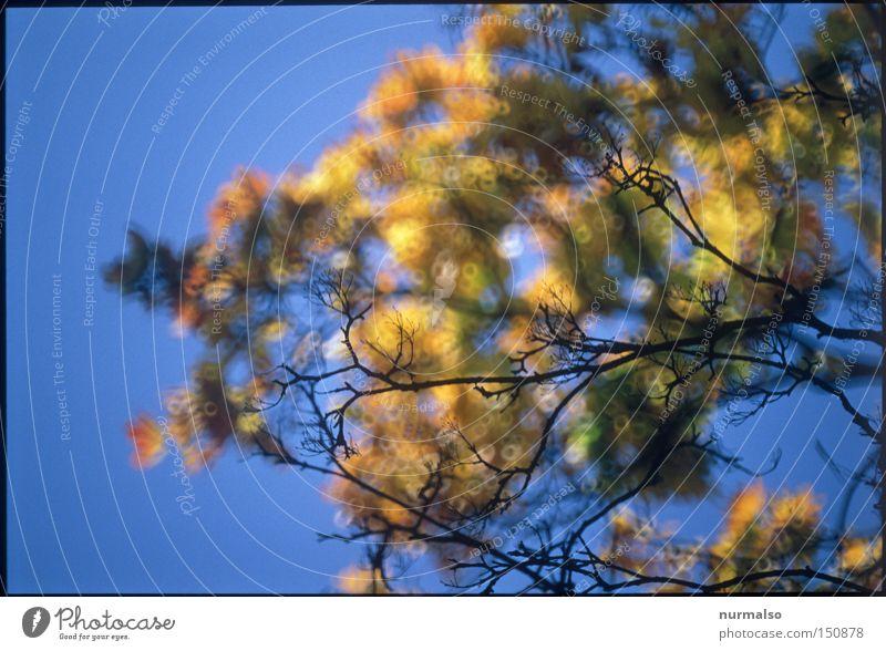 Antidepressiva Himmel blau Baum Freude Farbe Blatt Herbst leer Klarheit Ast fallen Ende deutlich reich Herbstfärbung Färbung