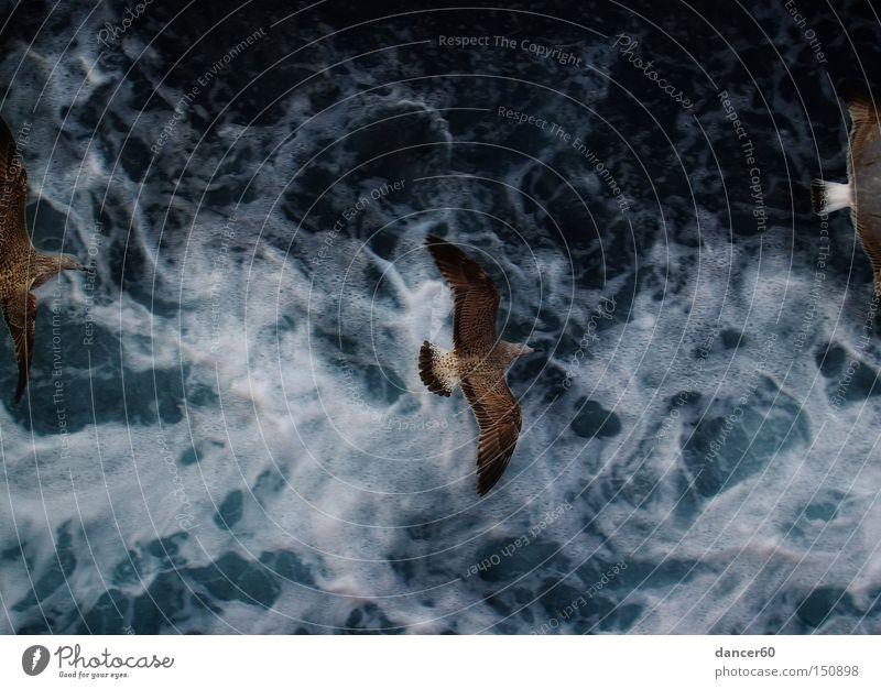 Durchflug Wasser Meer blau Ferien & Urlaub & Reisen Bewegung Vogel Schifffahrt Möwe Gischt