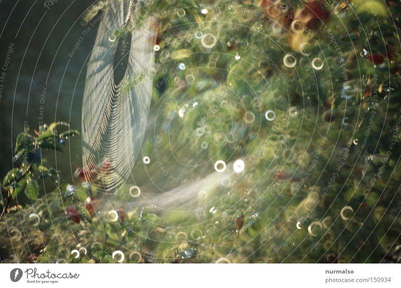 Spinne@Home III Haus Tier Herbst Gefühle Stimmung glänzend Wohnung Wassertropfen Tropfen Netz Spiegel Verbindung Tau fein Seide