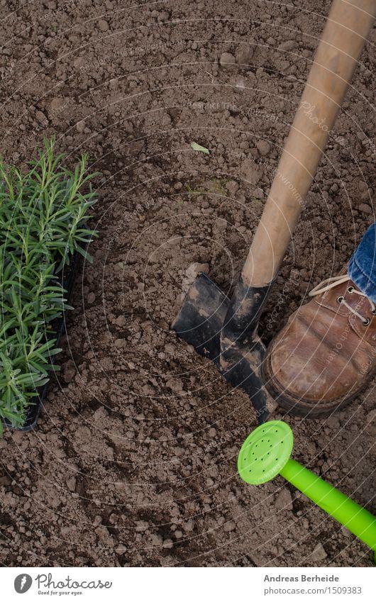 Gartenarbeit Sommer Küche Arbeit & Erwerbstätigkeit Werkzeug Natur Pflanze Erde Blatt Dorf Gießkanne Wachstum frisch natürlich grün Ackerbau Lavendel Kasten