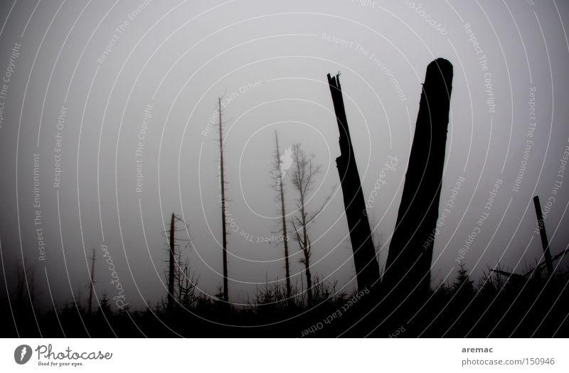 Klimawandel Baum Wald Nebel Sturm Schwarzwald Schaden Schwarzweißfoto Sturmschaden