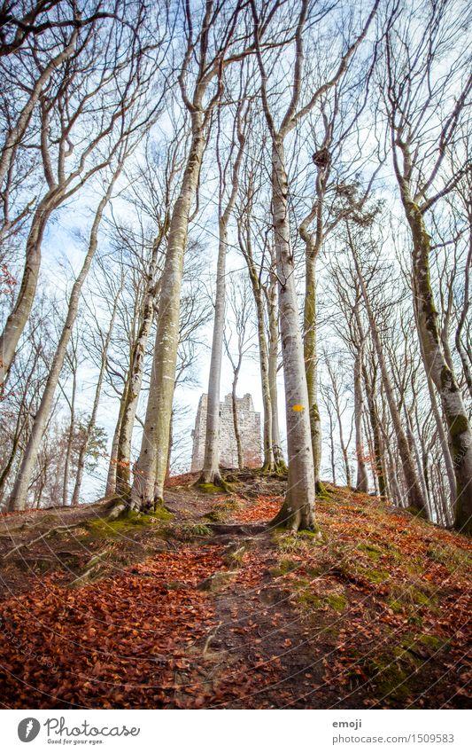 Wahrzeichen Umwelt Natur Landschaft Schönes Wetter Wald Burg oder Schloss Ruine Sehenswürdigkeit Denkmal alt außergewöhnlich Farbfoto Außenaufnahme Menschenleer