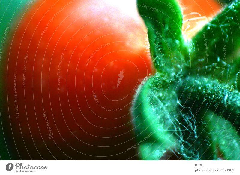 treulose... Ernährung Lebensmittel Kochen & Garen & Backen Küche Italien Gemüse Tomate Nachtschattengewächse