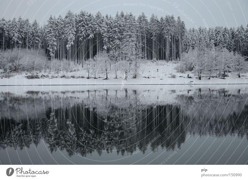 wasserspiegel See Wasser Reflexion & Spiegelung Seeufer Wald Baum Winter Schnee Eis kalt Frost dunkel Schatten ruhig Einsamkeit Natur