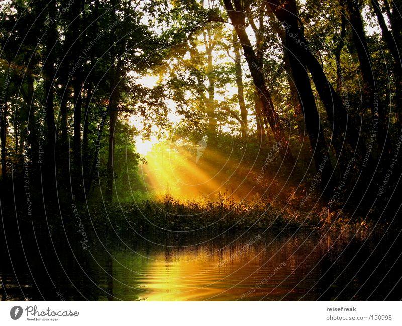 Sommerabend am See Reflexion & Spiegelung Wald Wasser Sonnenstrahlen Baum