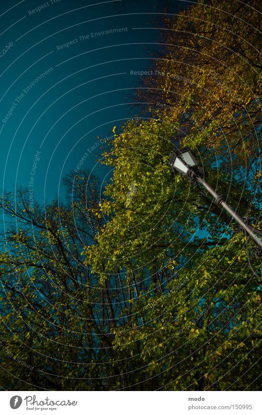 Die Lampe im Wunderland (auch ohne Alice) Himmel blau Baum Herbst gold Gold Säule Schwindelgefühl