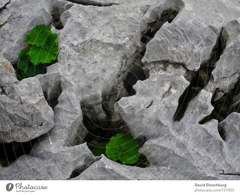 Erdrisse Natur weiß grün Pflanze Sommer Blatt schwarz Herbst Berge u. Gebirge Frühling grau Stein Felsen Boden Wüste Jahreszeiten