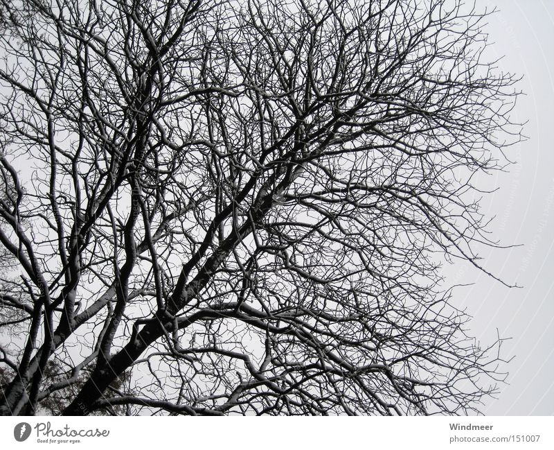 Schwarz auf Grau Baum Geäst Sträucher kahl kalt Schnee Holzmehl Wald Winter Zweig cold snow tree